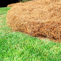Installed Premium Longleaf Bales
